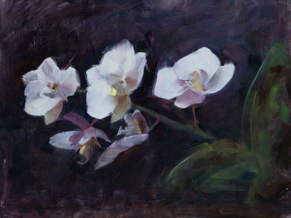 'Orchid Alla Prima', oil painting on canvas board, 30cm x 20cm